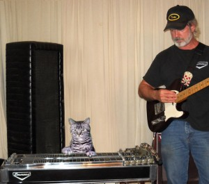 Toonces, the cat who could play a steel guitar